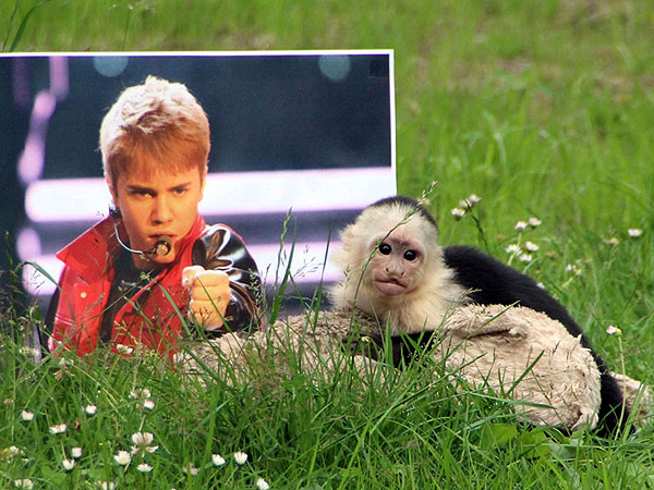 Justin Bieber's Monkey at Zoo in Germany, Out of Quarantine