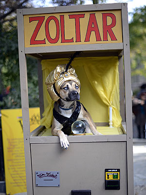 Tompkins Square Park Halloween Dog Parade: Photos