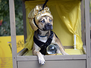 The Daily Treat: The Best Pics from the Tompkins Square Park Halloween Dog Parade