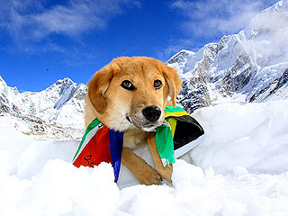 Rupee Becomes First Dog to Climb Mt. Everest
