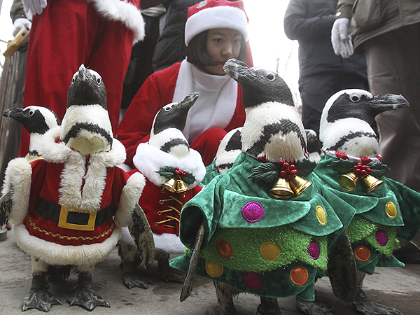 The Daily Treat: Penguins Wearing Santa Suits – Best Christmas Gift Ever!