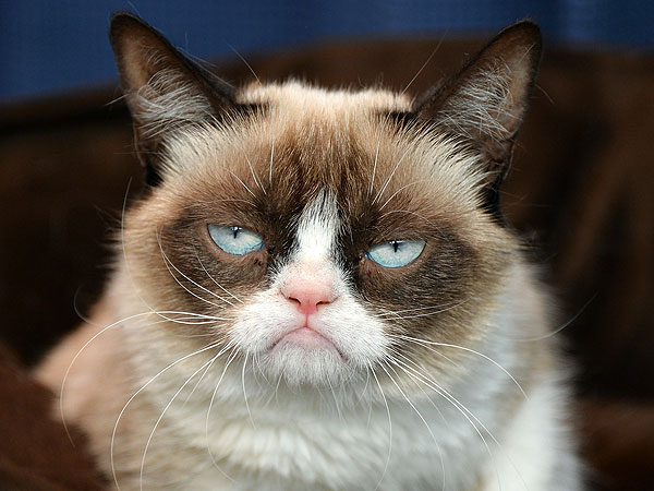 Grumpy Cat Helps PEOPLE Find the Most Beautiful Cat