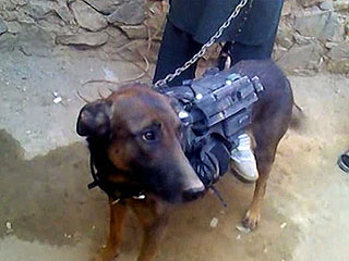 Military Dog Taken Prisoner by Taliban Fighters