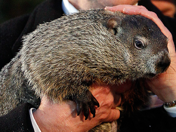 Punxsutawney Phil and Staten Island Chuck Predict More Winter