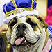Meet Lucey: The Adorable Winner of Iowa's 'Beautiful Bulldog' Contest
