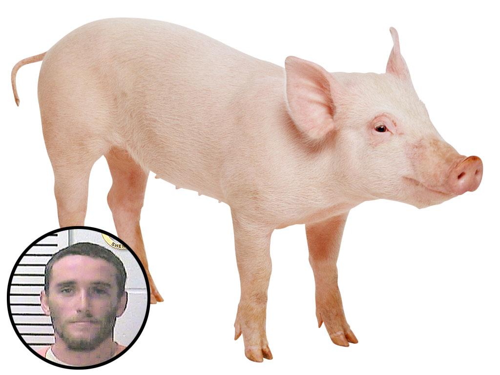 Missouri Man Stabbed over Missing Pig