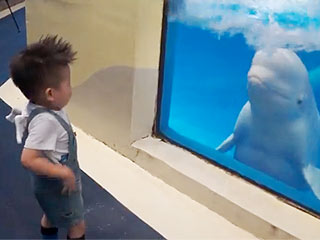VIDEO: Whale Spraying Child Is Best Metaphor Ever for Your Life   Cute Pets, Funny Pets, Pet Videos