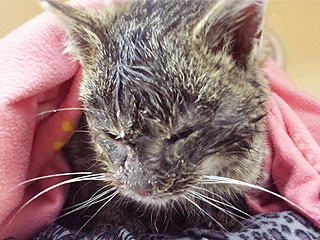 The Daily Treat: Ohio Woman Rescues Cat Found Frozen to the Road | Animals & Pets, Pet News
