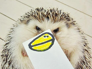 This Hedgehog's Dress-Up Game Is So On-Point | Animals & Pets, Cute Pets, Funny Pets, Pet News, Unusual Pets