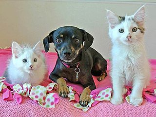 Adopt Us! Darla, Gem & Libby are a Trio to Remember