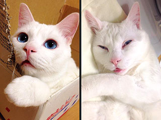 Adorable Cat Wins Title of 'Ugliest Sleeping Face in Japan'