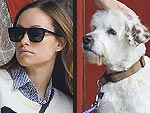 Stars and Their Pets | Olivia Wilde
