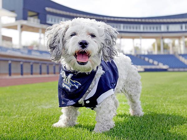 Milwaukee Brewers Make Stray Dog Mascot During Spring Training