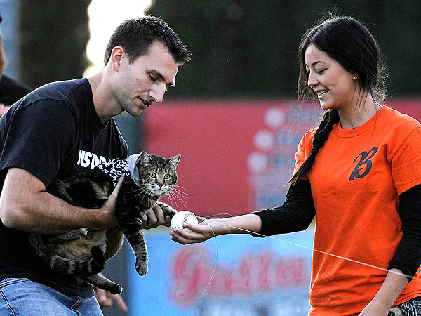 Hero Cat Throws First Pitch at Bakersfield Blaze Minor League Baseball Game
