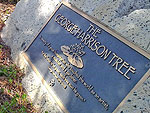 George Harrison Memorial Tree in L.A. Destroyed by Beetles (Seriously)