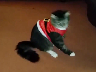 This Cat Really Doesn't Like His Santa Suit (VIDEO)