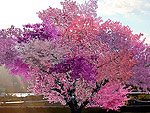 Believe It or Not: This Amazing Tree Grows 40 Different Kinds of Fruit