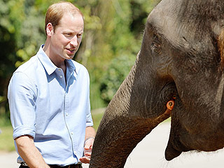 Prince William: How Would I Explain to My Kids if Rhinos and Elephants Went Extinct?