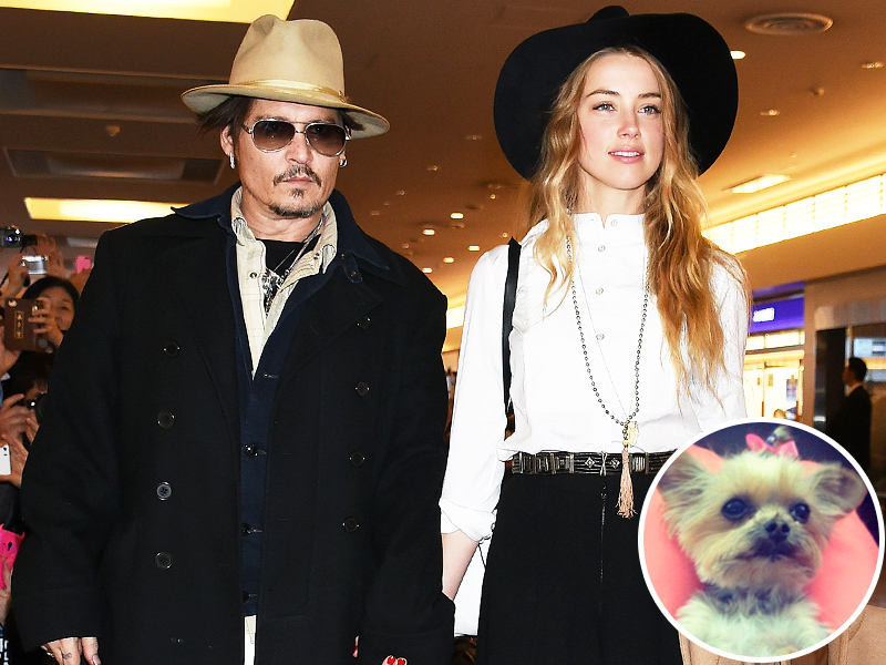 Amber Heard Charged with Smuggling Dogs into Australia