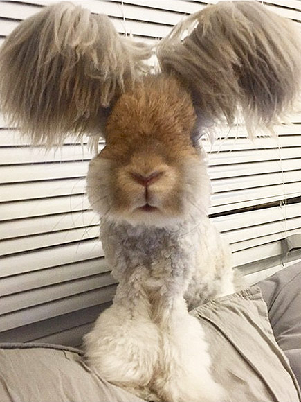 Wally the Angora Rabbi...