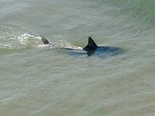 Seventh Shark Attack Reported in North Carolina – Witness Says He Saw a 'Trail of Blood From Water to Sand'