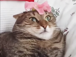 Watch a Cat Get Completely Shut Down by … a Flower? (Video)