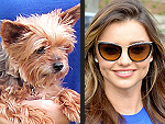 Stars and Their Pets | Stars and Pets, Miranda Kerr