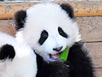 Meet Your Daily Panda Quota with This Baby Panda Party!
