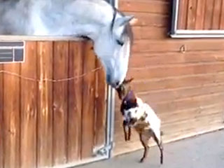 VIDEO: Watch a Little Goat Headbutt a Horse 'Hello'