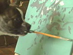 Painting Pooch Is Being Called the 'Next Picasso'