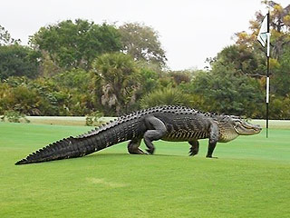 Giant Florida Golf Course Gator Is Back – and He Brought His Appetite