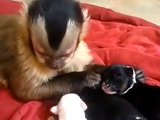 Watch: This Monkey Is a Expert Puppy Masseuse