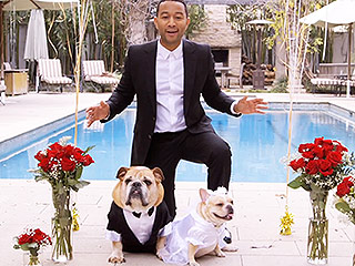 John Legend & Chrissy Teigen Marry Their Dogs in Most Perfect 'All of Me' Parody Video