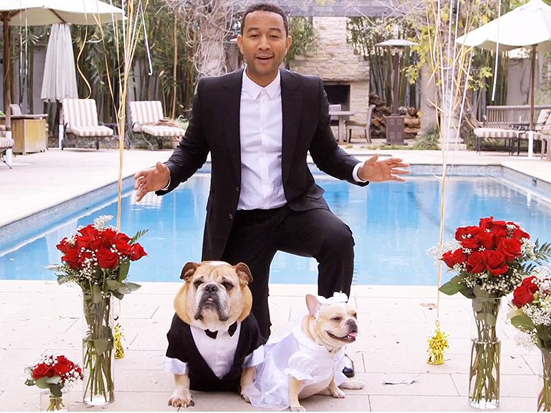 John Legend Chrissy Teigen Wed Dogs For Charity People Com