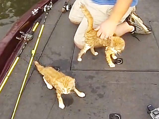 WATCH: Fishermen Rescue Two Kittens in Alabama's Warrior River