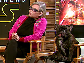 May the 4th Be With You: Why Gary, Carrie Fisher's Dog, Is the Biggest Hero of Our Time