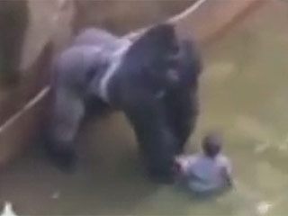 Family of 4-Year-Old Boy Who Climbed Into Zoo Pen Thanks Staff for Making 'Difficult Decision' to Shoot Gorilla