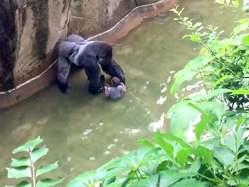 Mom Defends Herself After Son Leads To Cincinnati Zoo