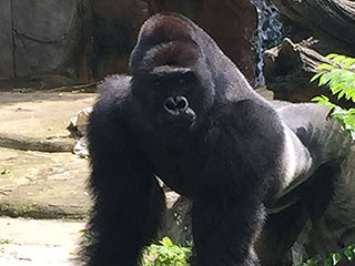 Cincinnati Parent Defends Mother of 4-Year-Old Who Fell Into Gorilla Enclosure: 'Things Happen'