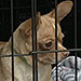 63 Chihuahuas Rescued from Colorado Breeding Operation