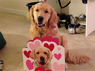 4 Pets Who Are Feeling the Love This Valentine's Day