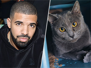 Grammy Award Nominees and Their Adoptable Cat Doppelgangers
