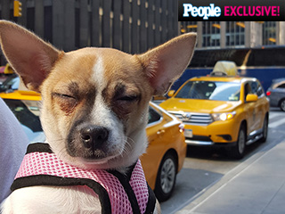 Shelter Chihuahua Travels to N.Y.C. for Her First Puppy Bowl – And Brings Along Her Cat BFF