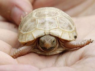 Rare Albino Sea Turtle Baby Spotted in Australia