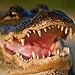 Massive Gator Tours Florida Golf Course