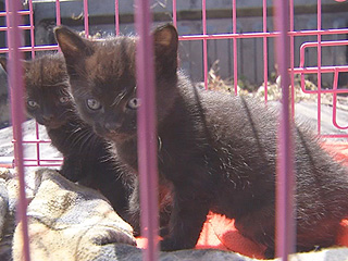 Kittens Abused by Boy at Texas Apartment Complex Are Recovering