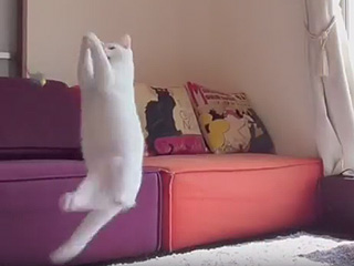 Mirko the Kitty Ballerina Is the Misty Copeland of Cats
