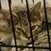 100 Cats Rescued from North Carolina Home