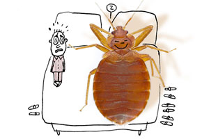 illustration of a frightened-looking person lying in bed next to a human-sized, sleeping, bed bug