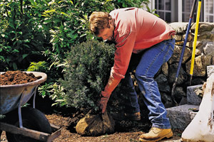 man bending over to do gardening